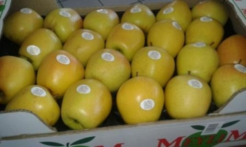 carton 50*30 2 rgs 44 fruits colo jaune