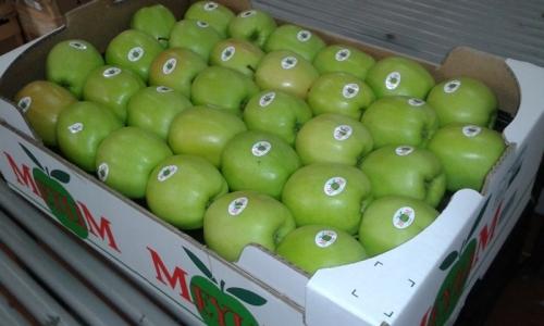 carton Meylim 2 rgs 60*40 pomme colo vert