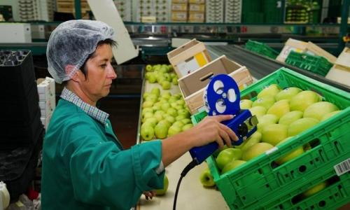 Etiquetado de las manzanas