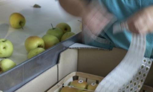 Fabricación a mano de cestas